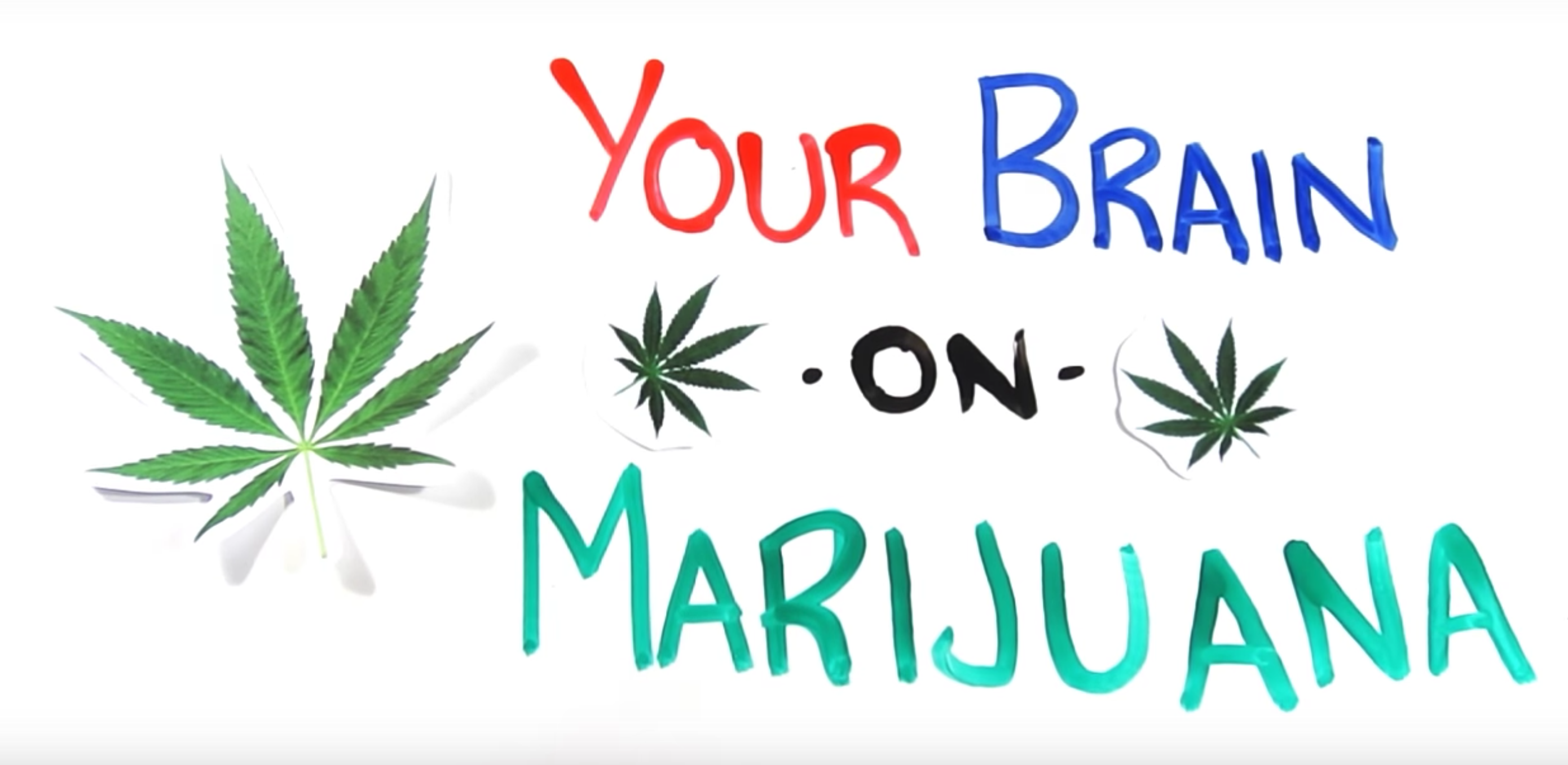 brain, marijuana, 4/20, weed, drugs, cannibis, purp skurp